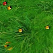 Слишком много жуков